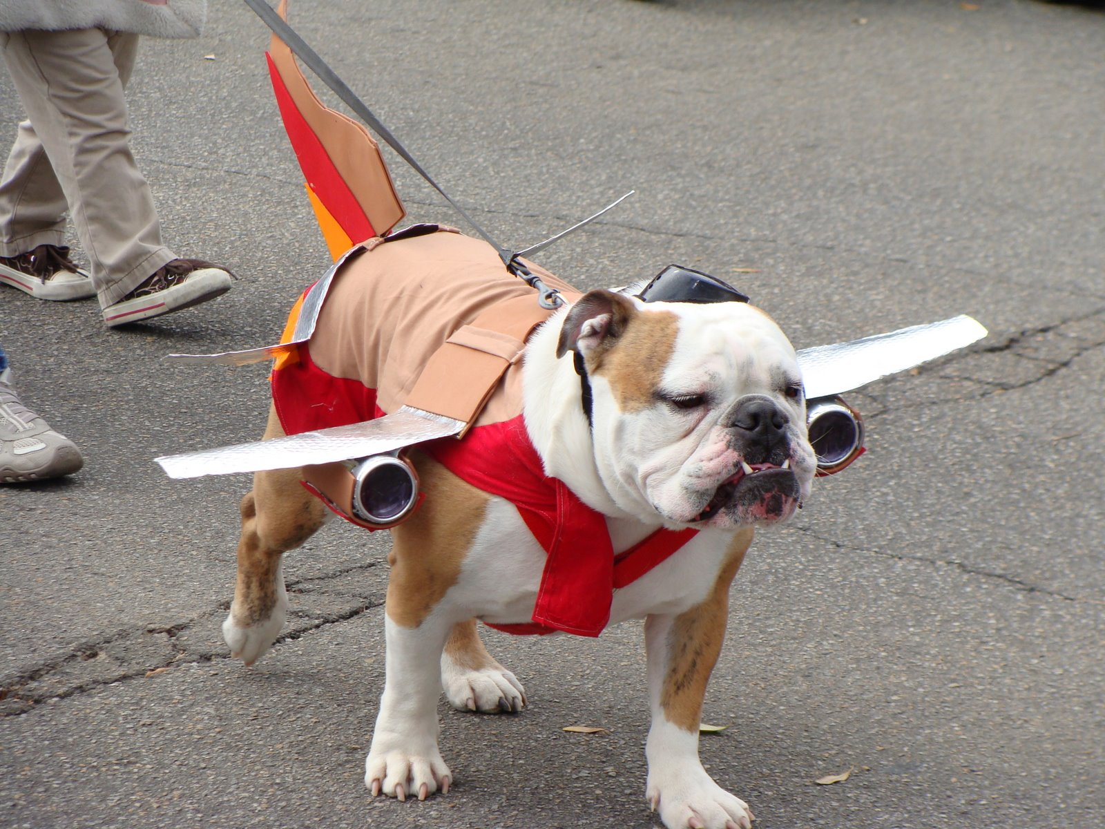 Dogs that fly speaking for spot for Best airline to fly dogs