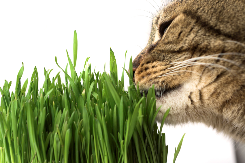 Cats Have Catnip Do Dogs Have Dog Nip