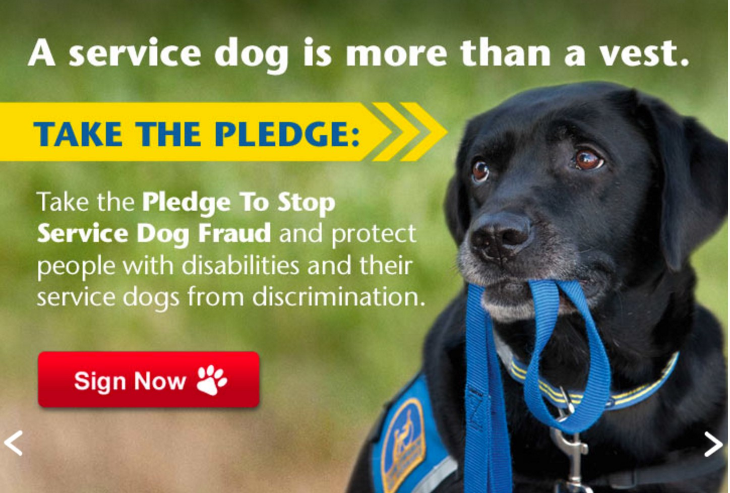 Fake service dogs spot speaks fake service dogs 1betcityfo Images