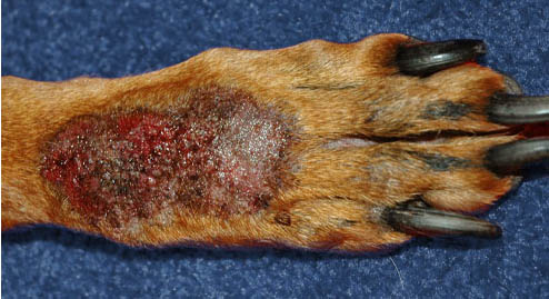 Was canine lick granulomas picture agree